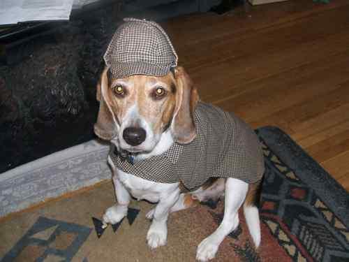 sherlock holmes dog