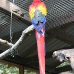 Macaw Mountain Bird Park—Copan Honduras