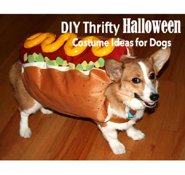 Costume ideas for dogs