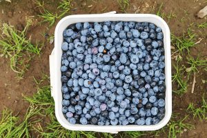 10 Blueberry Recipes you Should Make this Weekend