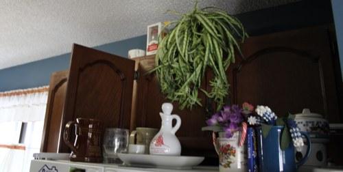 Kitchen Cupboards fridge