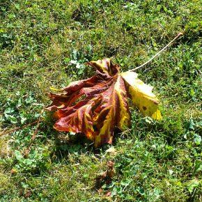 Fall lead
