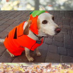 DIY Thrifty Halloween Costume Ideas for Dogs