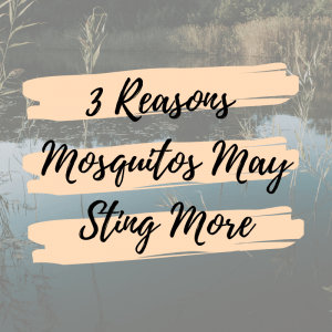 3 Reasons Mosquitos May Sting More